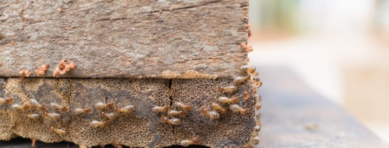 Is Termite Protection Worth Paying For